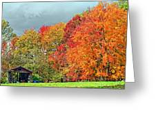West Virginia Maples 2 Greeting Card