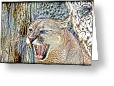 Western Cougar Greeting Card