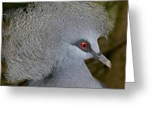 Western Crowned-pigeon Goura Cristata Greeting Card