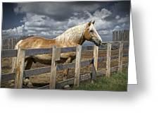 Western Palomino Horse In Alberta Canada No.1335 Greeting Card