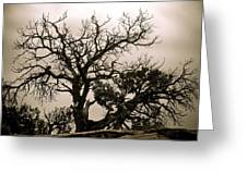 Western Winter Tree Greeting Card
