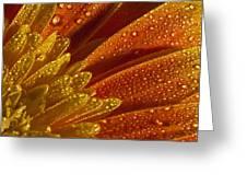 Wet Blumen Greeting Card