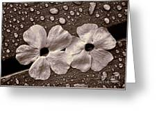 Wet Flowers And Wet Table Greeting Card