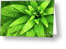 Wet Foliage Greeting Card