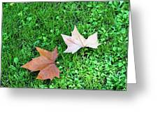 Wet Leaves On Grass Greeting Card
