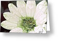 Wet Petals Greeting Card