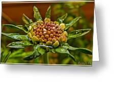 Wet Pinchshin Bud Greeting Card
