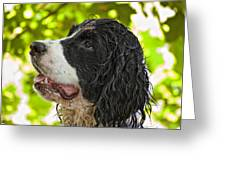 Wet Puppy 2 Greeting Card