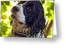 Wet Puppy Greeting Card