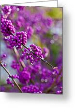 Wet Purple Greeting Card