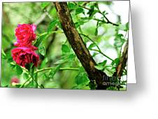 Wet Rogue Rose Greeting Card