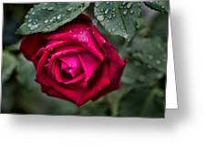 Wet Weather Rose Greeting Card