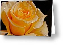 Wet Yellow Rose Greeting Card