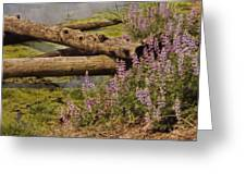 Wetland Beauty Greeting Card