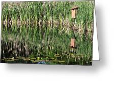 Wetland Reflections Greeting Card