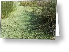 Wetland Shadows Greeting Card