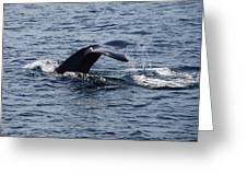 Whale Dive Greeting Card