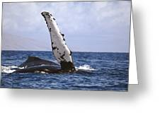 Whale Fin Above Water Greeting Card