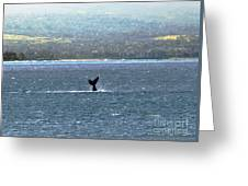 Whale Tail I Greeting Card