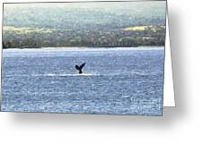 Whale Tail II Greeting Card