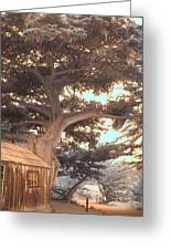 Whaler's Cabin Greeting Card by Jane Linders
