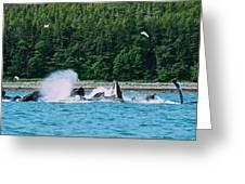Whales Bubble Net Feeding Greeting Card