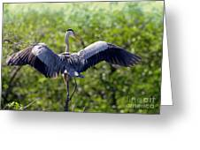 What A Wingspan Greeting Card