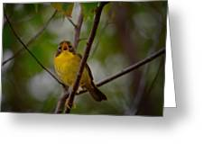 What Warblers Do Greeting Card