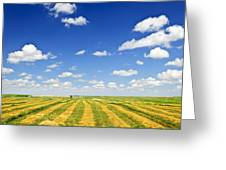 Wheat Farm Field At Harvest Greeting Card
