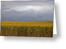 Wheat Field And Storm Greeting Card