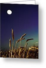 Wheat Field At Night Under The Moon Greeting Card