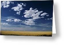 Wheat Field, Central Washington Greeting Card