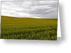 Wheat Field Homestead Greeting Card