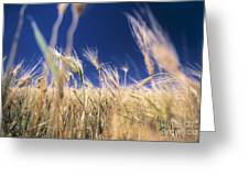 Wheat Field Greeting Card by Juan  Silva