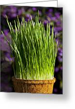Wheat Grass Greeting Card