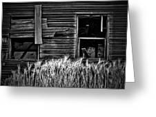 Wheat To Meet  Greeting Card
