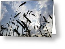 Wheat With Blue Sky Greeting Card