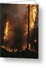 When Flames Crown Into Treetops Greeting Card
