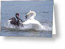 When Swans Attack Greeting Card