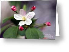 Where Apple Blossoms Blow Greeting Card