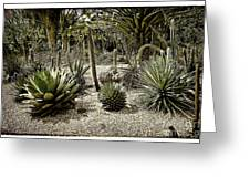 Where The Cacti Grow Greeting Card