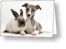 Whippet Pup With Colorpoint Rabbit Greeting Card