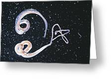 Whipworm Parasites Greeting Card