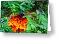 Whirl Wings Butterfly Greeting Card