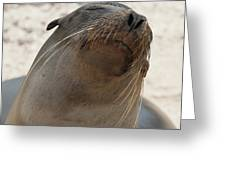 Whiskers On The Face Of A Fur Seal Greeting Card