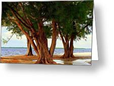 Whispering Trees Of Sanibel Greeting Card by Karen Wiles