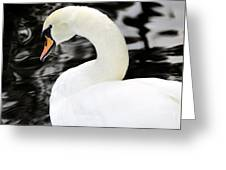 Whistling Swan Greeting Card