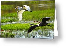 White And Grey Herons In Flight Greeting Card