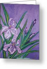 White And Mauve   Irises Greeting Card