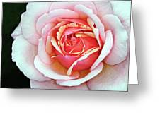 White And Pink Greeting Card